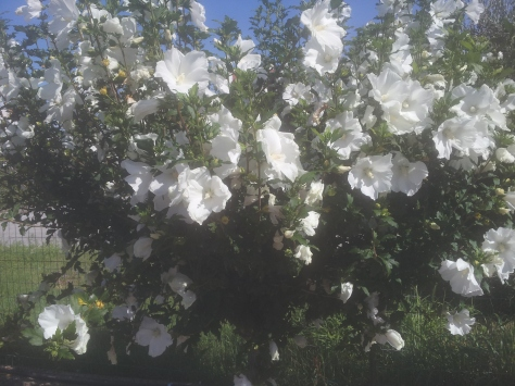Giardiniere a Macerata, Manutenzione Del Verde a Macerata