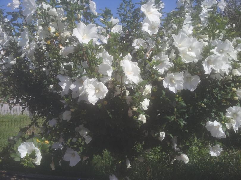 Giardiniere Macerata, Manutenzione Del Verde
