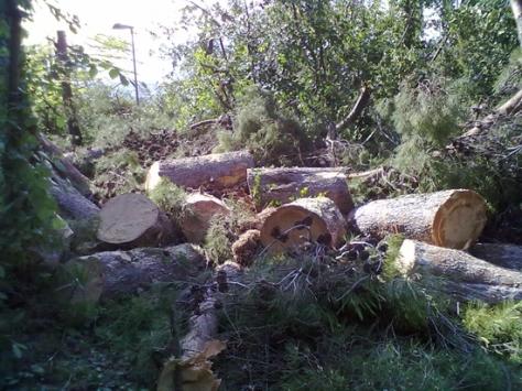Abbattimento Alberi Macerata, Potatura Alberi Macerata, Giardiniere a Macerata, Manutenzione Del Verde a Macerata, Giardinaggio a Macerata