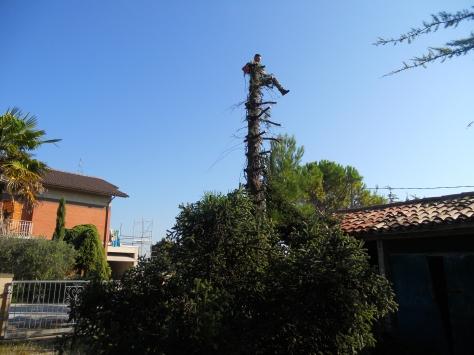 Abbattimenti alberi Macerata, Potatura alberi Macerata