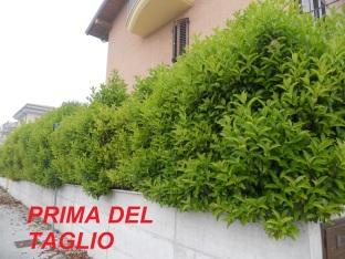 Giardiniere a Macerata, Giardinaggio a Macerata, Manutenzione del verde a Macerata