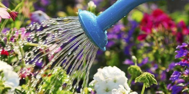 Giardiniere a Macerata, Manutenzione Del Verde a Macerata, Giardinaggio a Macerata