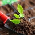 Giardiniere Macerata, Giardinaggio Macerata, Manutenzione del Verde Macerata