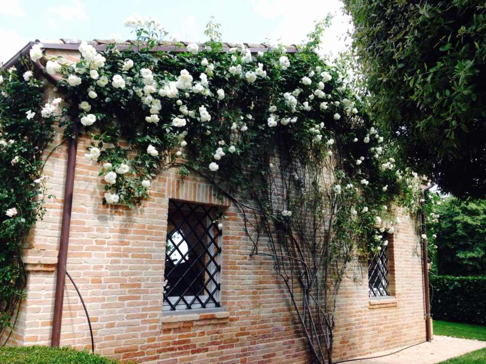 Potatura e cura delle rose giardiniere giardinaggio for Potatura delle rose
