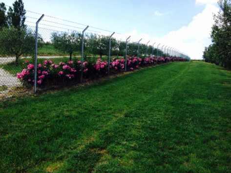 Giardiniere Macerata (Prato, Rose e Olivi)