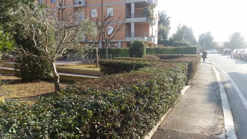Taglio siepi Macerata, Potatura alberi Macerata