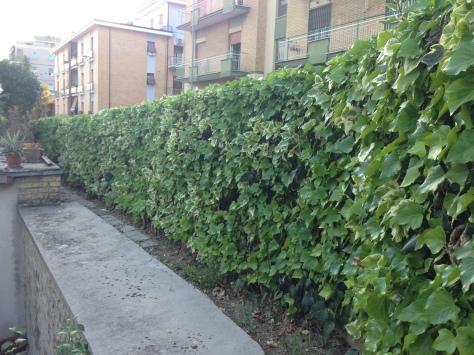 Giardiniere a Macerata, Manutenzione Del Verde Macerata,Giardinaggio Macerata